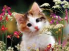 Flowery Kitty - 300pc Jigsaw Puzzle by Ravensburger
