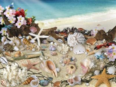 Sea Shell Seashore - 300pc Large Format Jigsaw Puzzle by Ravensburger