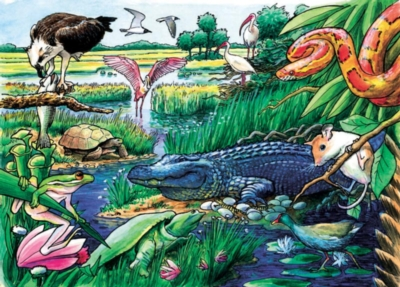 Cobble Hill Children's Puzzles - Animals of the Everglades