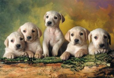 Educa Jigsaw Puzzles - Labrador Retrievers