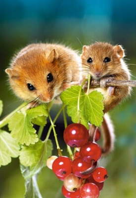 Hazel Mouse with Cub - 260pc Jigsaw Puzzle by Castorland