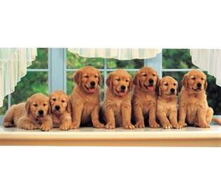 All In a Row - 1000pc Panoramic Jigsaw Puzzle by Clementoni