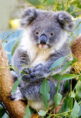 Koala - 500pc Jigsaw Puzzle by Castorland