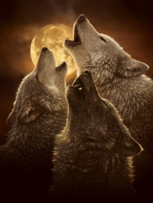 Wolves Puzzles - Wolf Trinity