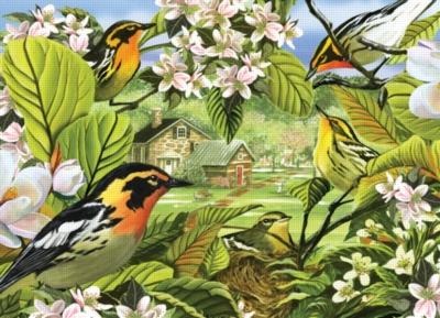 Cobble Hill Jigsaw Puzzles - Blackburnian Warblers