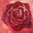 Red Rose - 500pc Square Jigsaw Puzzle By Ravensburger