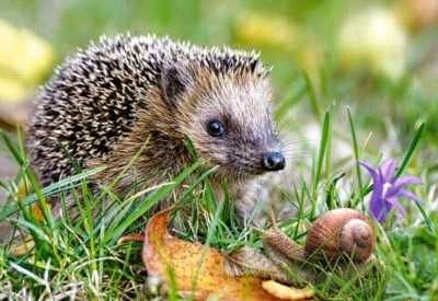 Jigsaw Puzzles - Hedgehog