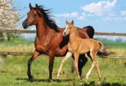 Jigsaw Puzzles - Mare and Foal