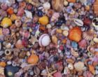 Sea Shells - 1000pc Jigsaw Puzzle by Piatnik