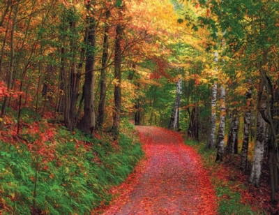 Crimson Road - 36pc Large Format Jigsaw Puzzle by Springbok