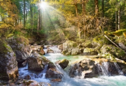 Jigsaw Puzzles - The Forest Stream