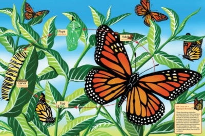 Educational Puzzles - Life Cycle of a Monarch Butterfly