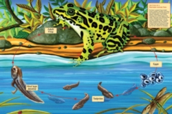 Cobble Hill Children's Puzzles - Life Cycle of a Nothern Leopard Frog
