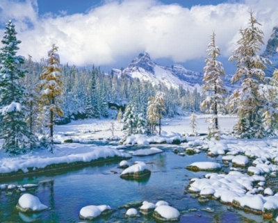 Springbok Jigsaw Puzzles - Winter Paradise