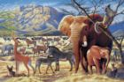Savanna Sunrise - 1000pc Jigsaw Puzzle by Tomax