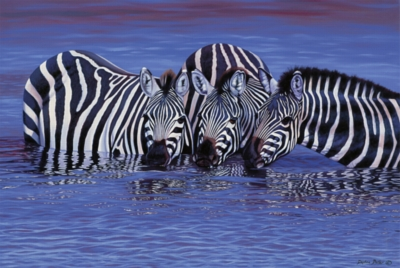 Tomax Jigsaw Puzzles - Zebras In The Water