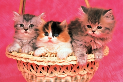 Tomax Jigsaw Puzzles - Kittens