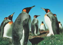 Tomax Jigsaw Puzzles - Penguin's Paradise