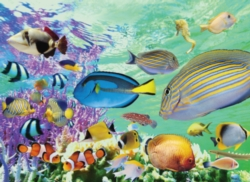 Tomax Jigsaw Puzzles - Tropical Marine