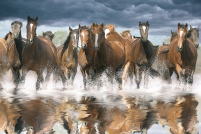 Jigsaw Puzzles - Horses