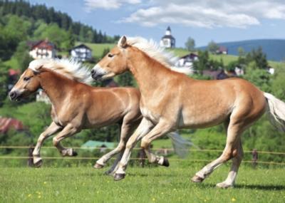 Children's Puzzles - Ponies