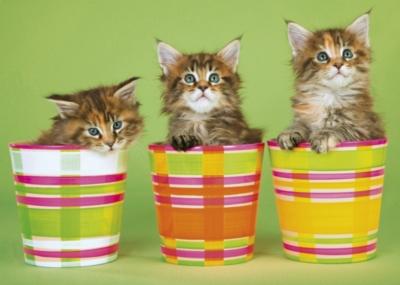Children's Puzzles - Cats