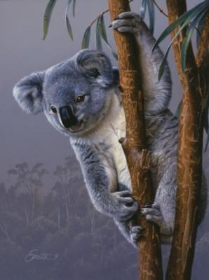 Jigsaw Puzzles - Koala