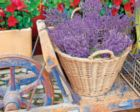 Basket of Lavender - 1000pc Jigsaw Puzzle by Springbok