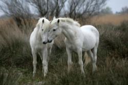Tomax Jigsaw Puzzles - White Stallions