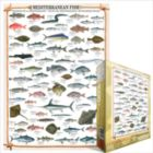 Mediterranean Fish - 1000pc Jigsaw Puzzle by Eurographics