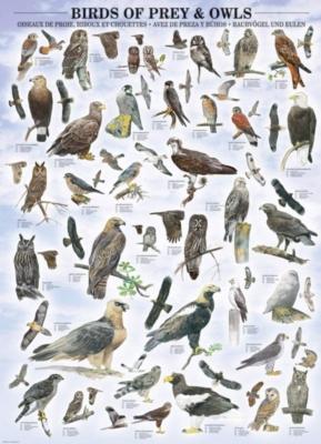 Eurographics Jigsaw Puzzles - Birds of Prey & Owls