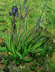 Eurographics Jigsaw Puzzles - Van Gogh: Iris