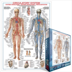 Eurographics Jigsaw Puzzles - Circulatory System