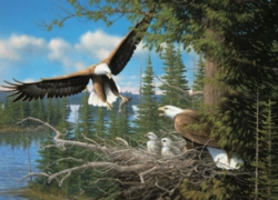 Cobble Hill Jigsaw Puzzles - Nesting Eagles