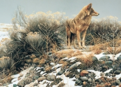 Cobble Hill Jigsaw Puzzles - Coyote in Winter Sage