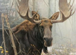 Cobble Hill Jigsaw Puzzles - Bull Moose