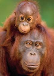 Eurographics Orangutan & Baby Jigsaw Puzzle