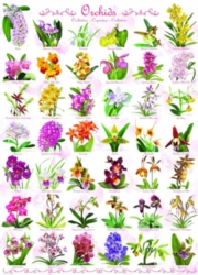 Eurographics Orchids Jigsaw Puzzle