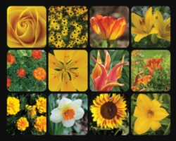 Springbok Golden Blooms Jigsaw Puzzle