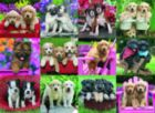 Puppy Pals - 500pc Jigsaw Puzzle by Ravensburger