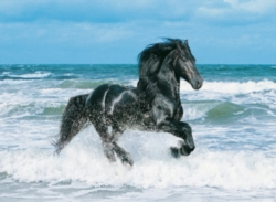 Clementoni Black Horse Jigsaw Puzzle