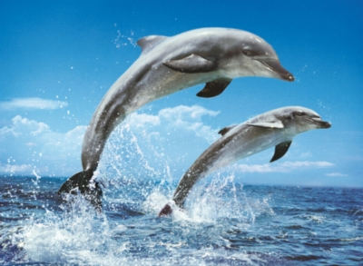 Clementoni Dolphins Jigsaw Puzzle