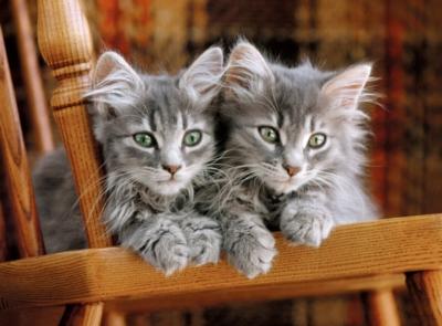 Clementoni Kittens Jigsaw Puzzle
