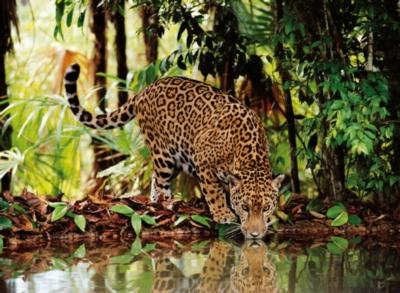 Clementoni Leopard Jigsaw Puzzle