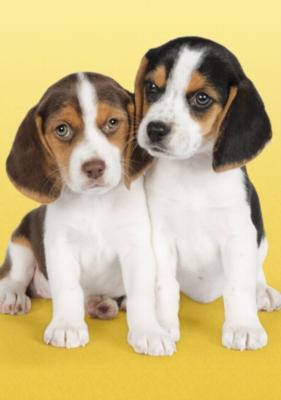 Clementoni Nice Beagles Jigsaw Puzzle
