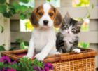 The Dog and the Cat - 1000pc Jigsaw Puzzle by Clementoni