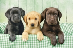 Clementoni Three Labs Jigsaw Puzzle
