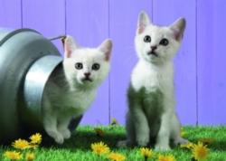Schmidt Cat Sisters Jigsaw Puzzle
