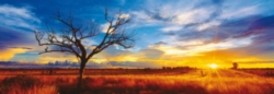 Schmidt Desert Oak at Sunset Panoramic Jigsaw Puzzle