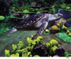 SeaWorld Sea Turtle - 500pc Jigsaw Puzzle by Andrews + Blaine